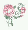 rose flower engraving vector image vector image