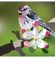 Beautiful Spring Watercolour Bird vector image