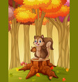 cartoon squirrel holding acorn in the forest vector image