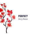 realistic sakura blossom - japanese red cherry vector image vector image