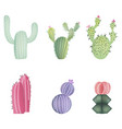 set different colorful realistic cactuses vector image