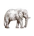 sketch of walking african elephant vintage hand vector image vector image