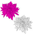 beautiful monochrome and color sketch dahlia vector image vector image