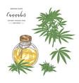 cannabis sativa or cannabis indica plant vector image vector image
