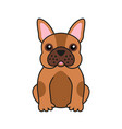 cute french bulldog design for greeting card vector image