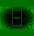 cannabis or marijuana green leaves background vector image