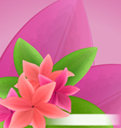 pink and red frangipani plumeria exotic flowers vector image vector image