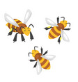 cartoon style bees vector image vector image