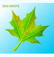dew drops on green leaf vector image vector image
