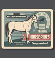 equestrian sport horse riding hippodrome vector image