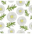 Pattern with camomile and leaves hand drawing vector image vector image