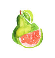 juicy guajava with green leaves healthy tropical vector image vector image
