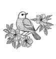 nightingale songbird on a branch set vector image vector image