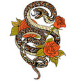 snake and roses tattoo vector image vector image
