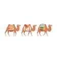 caravan camels desert animals carrying heavy vector image
