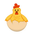 cute newborn chicken in half of egg shell vector image