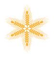 healthy wheat organ plants nutricious vector image vector image