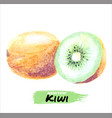 watercolor kiwi set hand drawing isolated vector image vector image