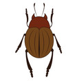 a brown beetle with six legs or color