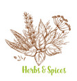 herbs and spices sketch with basil and rosemary vector image vector image
