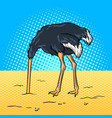 ostrich hid its head in the sand pop art vector image vector image