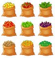 set of fresh vegetables in sack vector image
