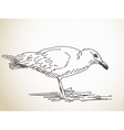 Sketch of Seagull vector image vector image