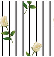 white rose on striped background vector image vector image
