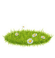 grass with white fleabane vector image