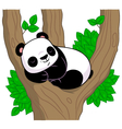 Panda sleeps on the tree vector image vector image