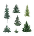 watercolor set with green fir trees vector image