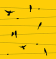Birds and wires vector image