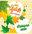 big best autumn sale concept background cartoon vector image vector image