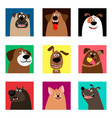cute comic puppy heads vector image vector image