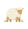domestic curly white cheep cartoon style poster vector image