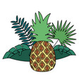 pineapple tropical fruits foliage exotic vector image vector image