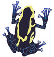 poison dart frog vector image vector image