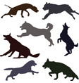silhouettes of different dog breeds vector image