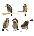 isolated sparrows painted in chinese technique vector image