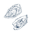 seafood delicacy bivalve clam oyster sketch poster vector image vector image
