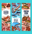 banners fresh seafood fish product sketch vector image vector image