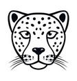 cheetah head face of feline predator vector image vector image