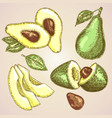 detailed hand drawn fruit avocado vector image vector image