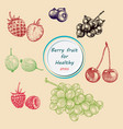 berry fruit set vector image vector image