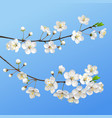 blooming branch spring flowers vector image vector image