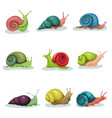 collection of snails of different shell colours vector image