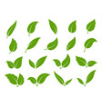leaf icon green leaves trees and vector image vector image