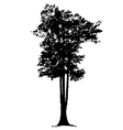 big trees in silhouettes vector image vector image
