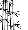 black and white bamboo vector image vector image