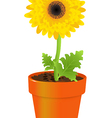 Daisy In Pot vector image vector image